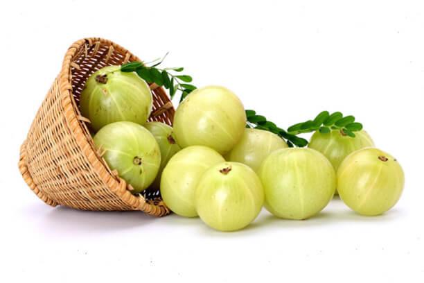 Amla as a ayurvedic medicine for weight loss