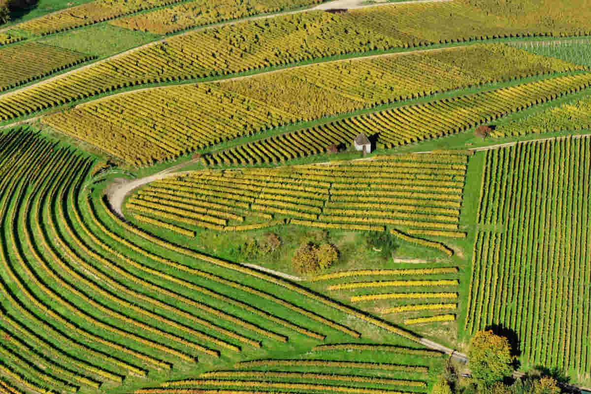 Biodynamic farming benefits
