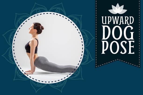 Upward dog pose yoga asana