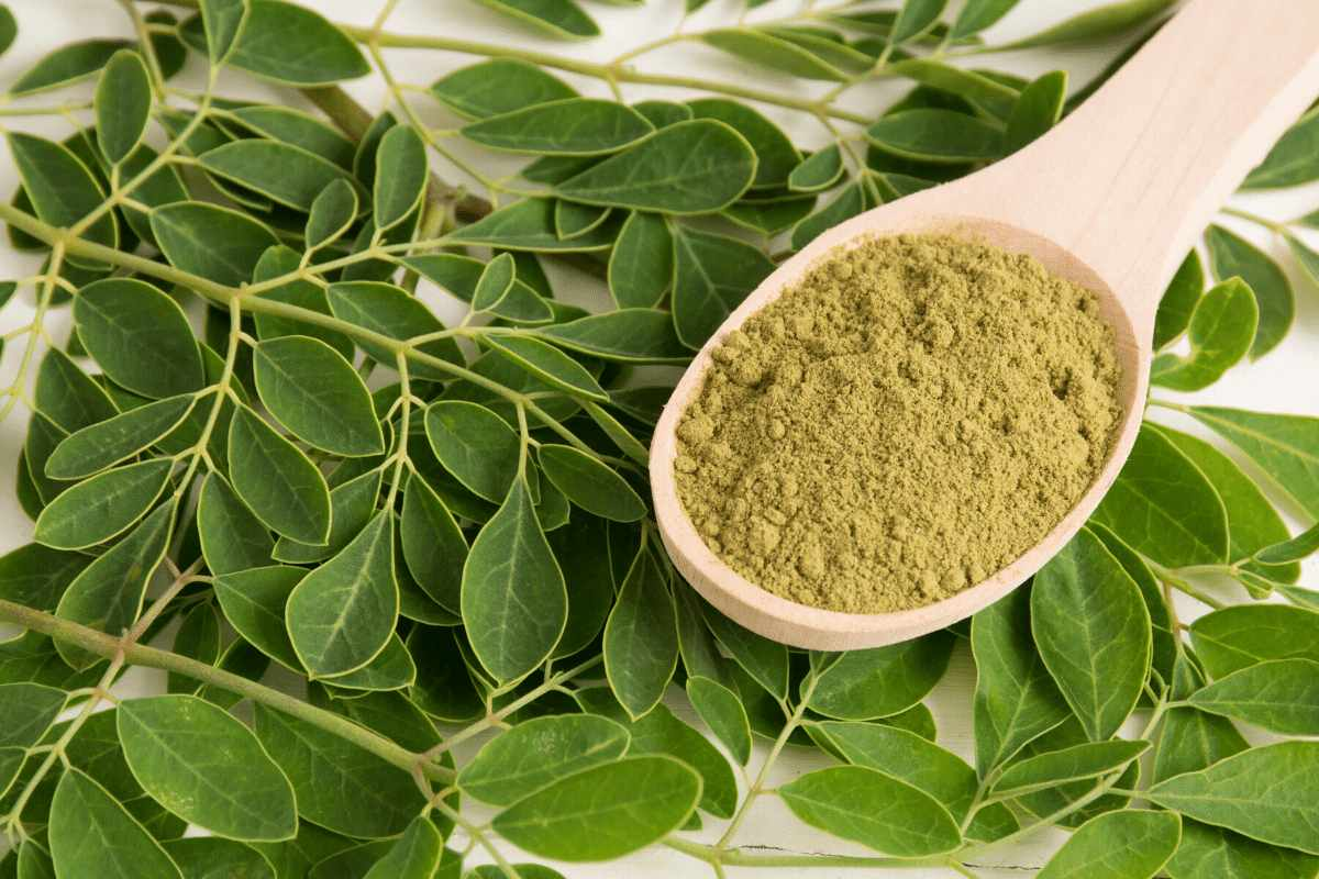 Moringa leaves for weight loss