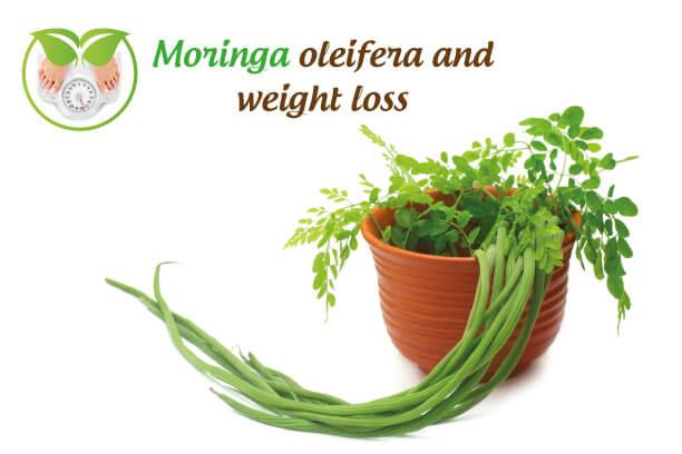 Moringa oleifera and weight-loss