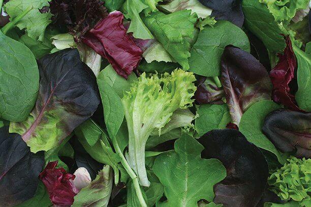 Dark Leafy veggies for summer